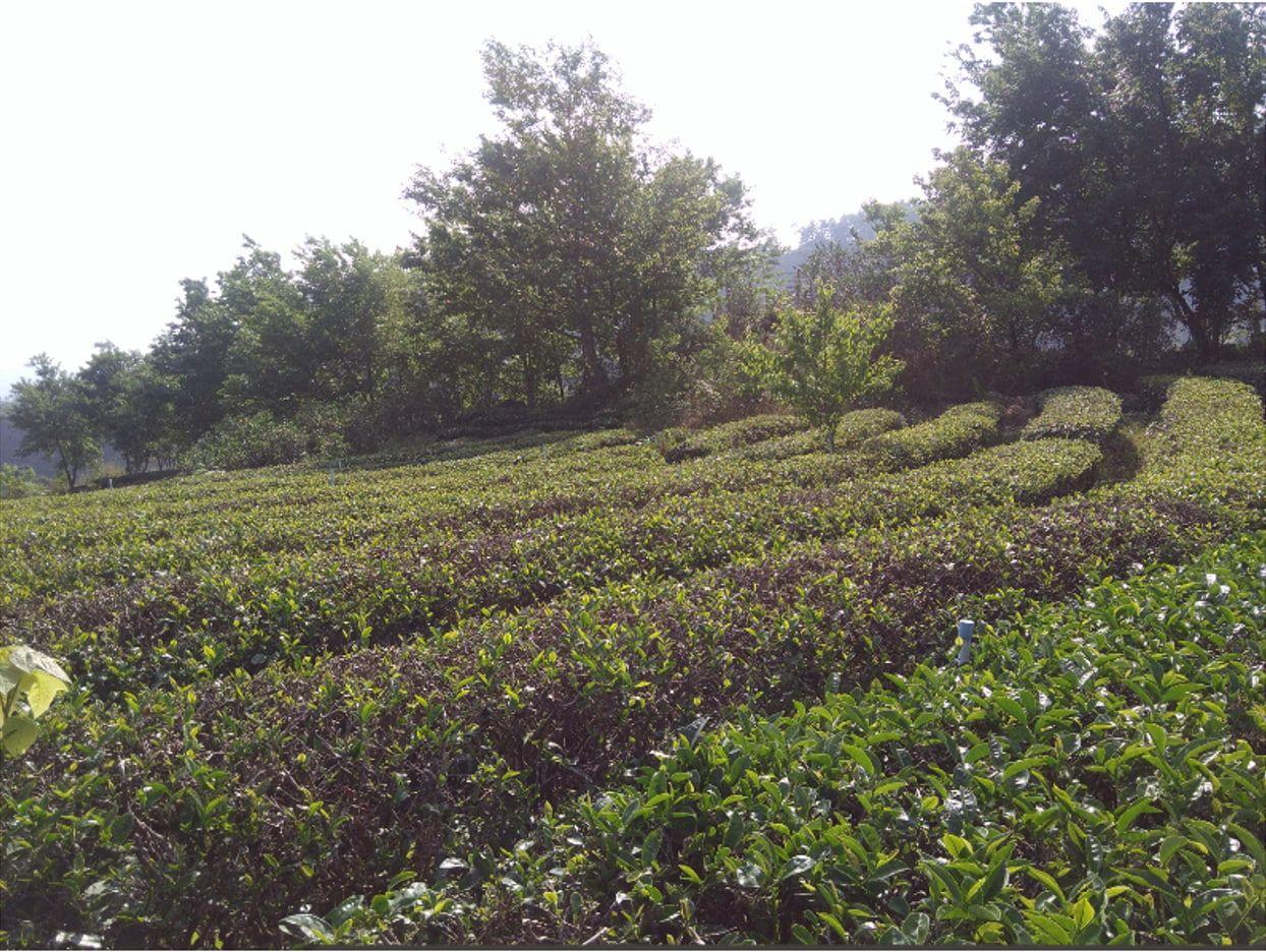 營商可以不一樣 ——T國茶園體驗分享